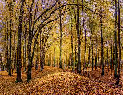 Photograph - Walkway In The Autumn Woods by Dmytro Korol