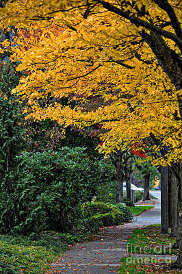 Photograph - Walkway Under A Canopy Of Yellow by Kirt Tisdale