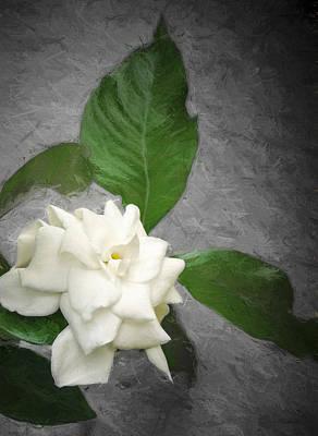 Gardenia Photograph - Wall Flower by Carolyn Marshall