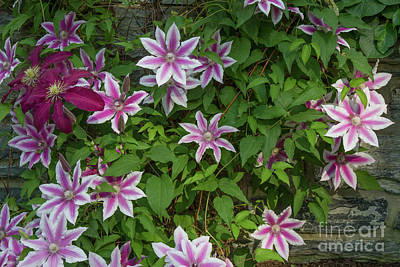 Photograph - Wall Flowers by Chris Scroggins