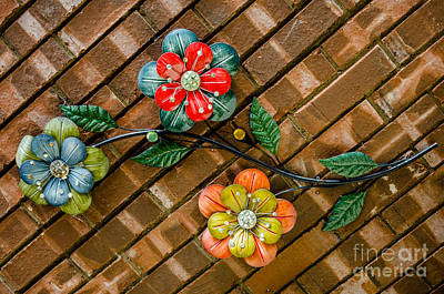 Photograph - Wall Flowers by Debra Martz