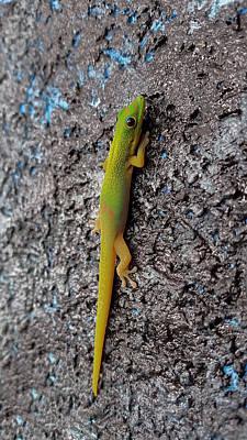 Photograph - Wall Gecko by Pamela Walton