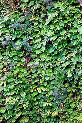 Photograph - Wall Of Green by Robert Meyers-Lussier