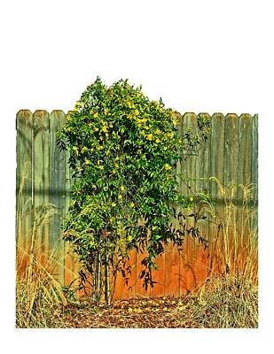 Yellow Jessamine Photograph - Wall Of Jasmine by Larry Bishop