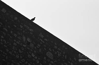 Black And White Photograph - Wall Surfin Bird by Angelo DeVal
