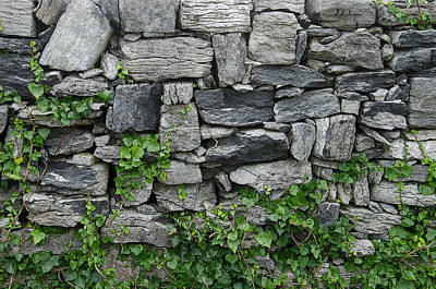 Photograph - Wall With Vines by John Farley