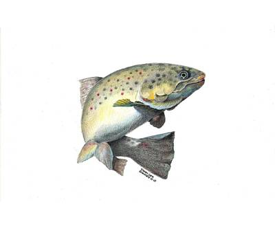 Brown Trout Drawing - Wallace Brantley Fishing Series Mr. T by Sharon Blanchard