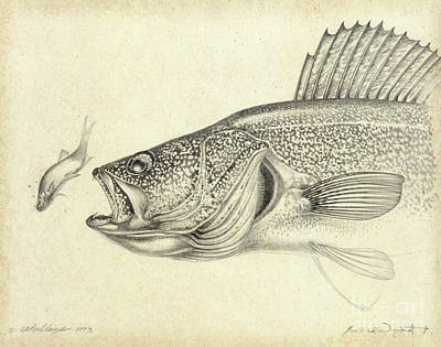 Walleye Drawing Art Print by Jon Wright