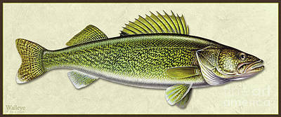 Painting - Walleye Id by Jon Q Wright