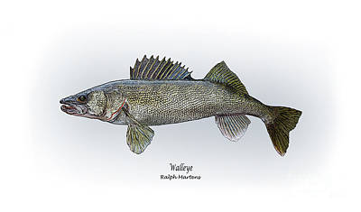 Walleye Painting - Walleye by Ralph Martens
