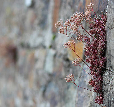Photograph - Wallflower by Silke Brubaker