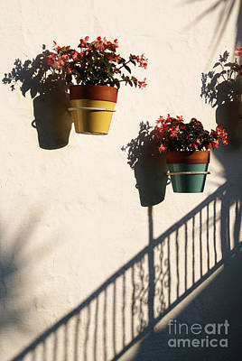 Photograph - Wallflowers by Linda Shafer