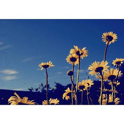Wallpaper Photograph - #wallpaper Material 😀  #blu #sky & by Anji Fernando