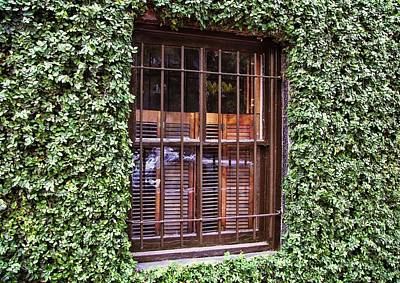 Photograph - Walls Of Ivy by JAMART Photography