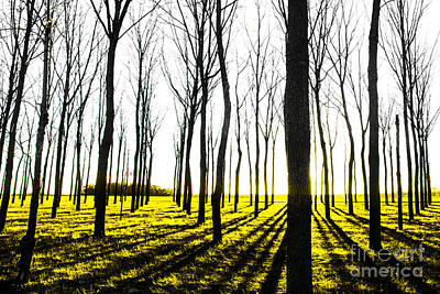Photograph - Walnut Grove Fall Sunset 2 by Michael Arend
