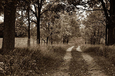 Photograph - Walnut Lane Antiqued by Melissa Lane