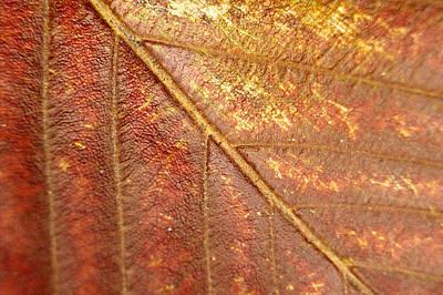 Modern Man Surf - Walnut Leaf by Casey Urrutia