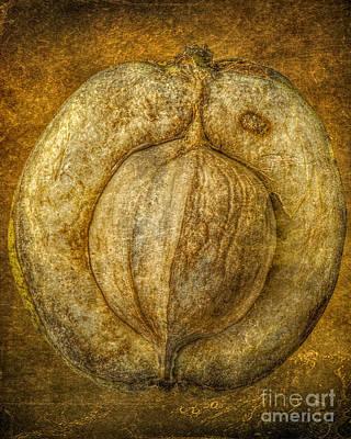 Walnut Texture Macro Stil Life Art Print