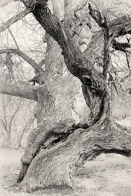 Walnut Tree Photograph - Walnut Tree In Winter by Joseph Smith