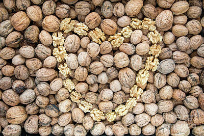 Photograph - Walnuts And Nut Kernels by Michal Boubin