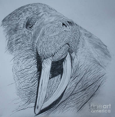 Drawing - Walrus by David Joyner