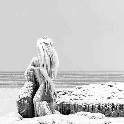Photograph - Walrus Ice by Stewart Helberg