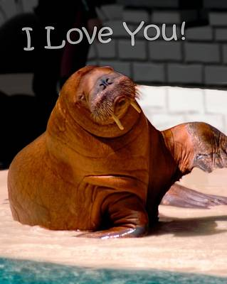 Photograph - Walrus Loves You by Bob Pardue