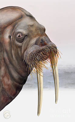 Painting - Walrus Odobenus Rosmarus - Marine Mammal - Walross by Urft Valley Art