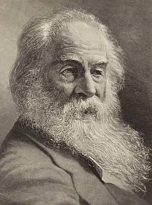 Author Drawing - Walt Whitman by American School