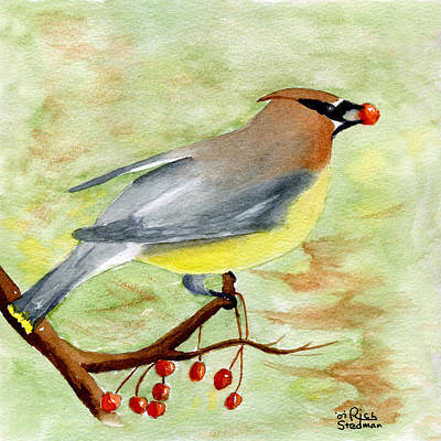 Cedar Waxing Painting - Walter Wax Wing by Rich Stedman