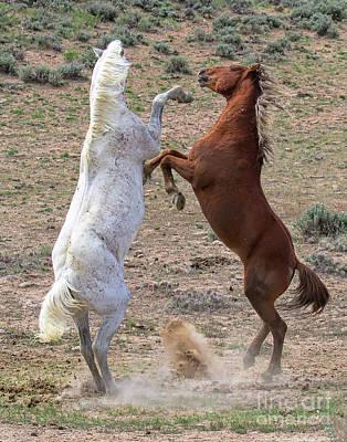 Photograph - Waltz Of The Stallions by Jim Garrison