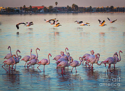 Photograph - Walvis Bay Flamingos by Inge Johnsson