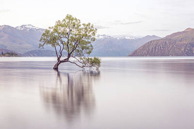 Wanaka Tree Art Print