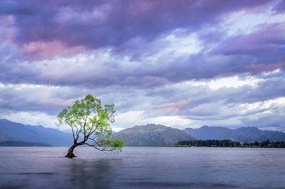 Photograph - Wanaka Tree Sunset by Daniela Constantinescu