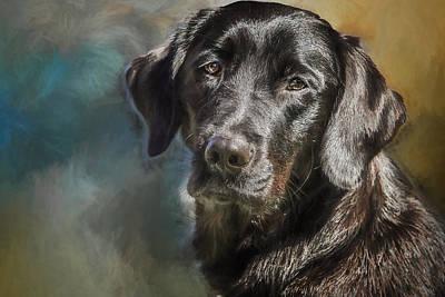 Labrador Photograph - Wanda by Eleanor Abramson