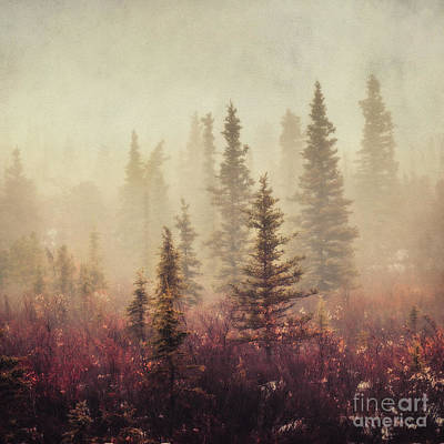 Wander In The Fog Art Print by Priska Wettstein