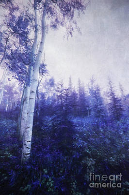 Wander Through The Foggy Forest Art Print by Priska Wettstein