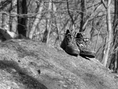 Photograph - Wanderer by Brenda Conrad