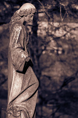 Photograph - Wandering Lady Of Myrtle Hill Bw by James L Bartlett
