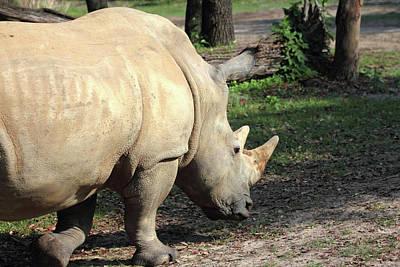 Rhinocerus Photograph - Wandering Rhino by Mary Haber