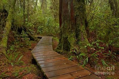 Photograph - Wandering Through The Rainforest by Adam Jewell