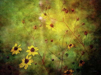 Photograph - Waning Coreopsis 3866 Idp_2 by Steven Ward