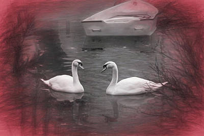 Cygnus Photograph - Wanna Go For A Boat Ride ? by Donna Kennedy