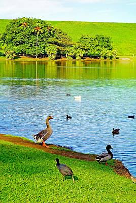 Photograph - Waokele Pond And Ducks by Robert Meyers-Lussier