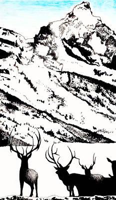 Teton Drawing - Wapati Elk by Barbara Fowler