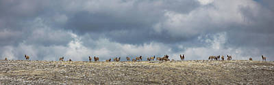 Photograph - Wapiti Ridge by Sean Allen