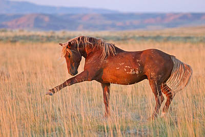Wild Horses Photograph - War Horse by Sandy Sisti