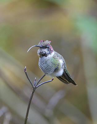 Rare Bird Sighting Photograph - War Mask by Dave Sattler