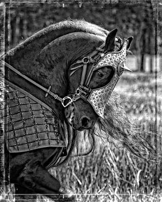 Photograph - War Stallion by Wes and Dotty Weber