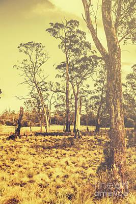Waratah Landscape In Sunlight Art Print by Jorgo Photography - Wall Art Gallery